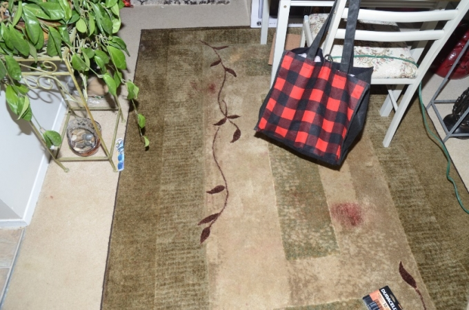 Blood staining on the carpet inside the apartment near the table upon which it was reported that the Complainant had struck his head when he fell after the SO deployed his CEW.